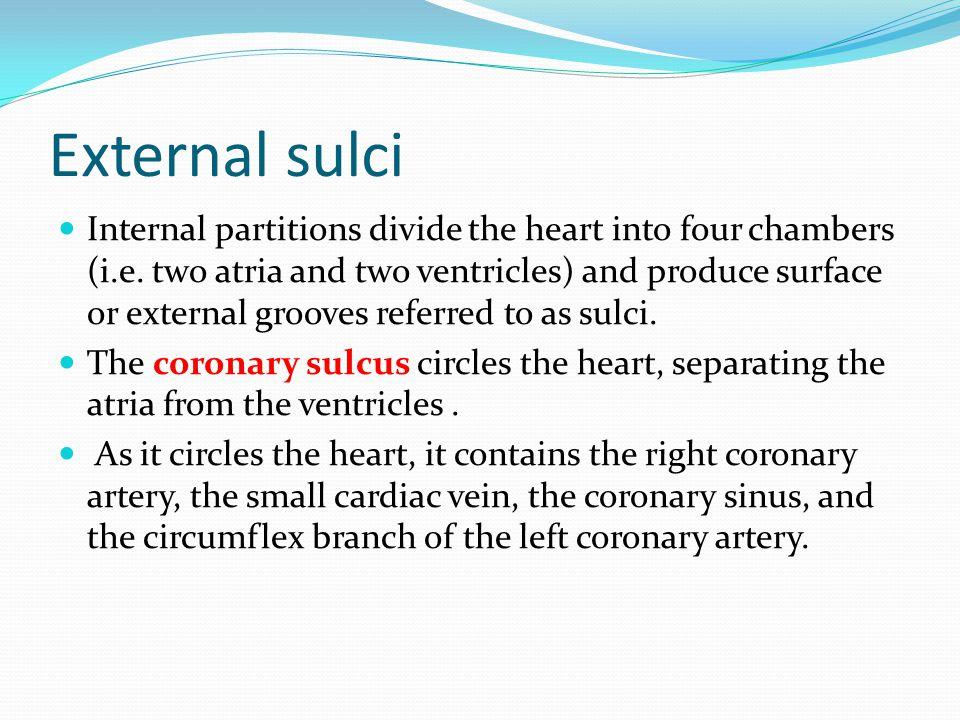 External sulci Internal partitions divide the heart into four chambers (i.e. two atria and two ventricles) and produce surface or external grooves ref