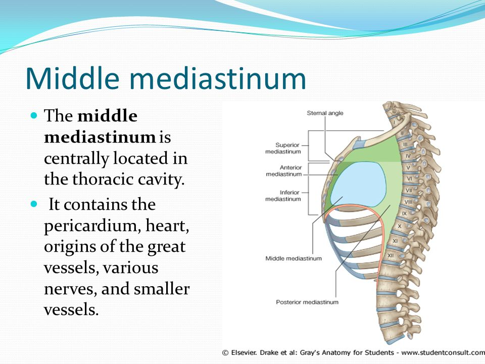 Middle mediastinum The middle mediastinum is centrally located in the thoracic cavity.
