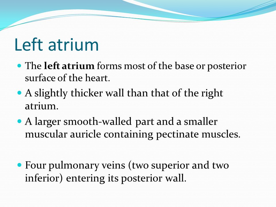 Left atrium The left atrium forms most of the base or posterior surface of the heart.
