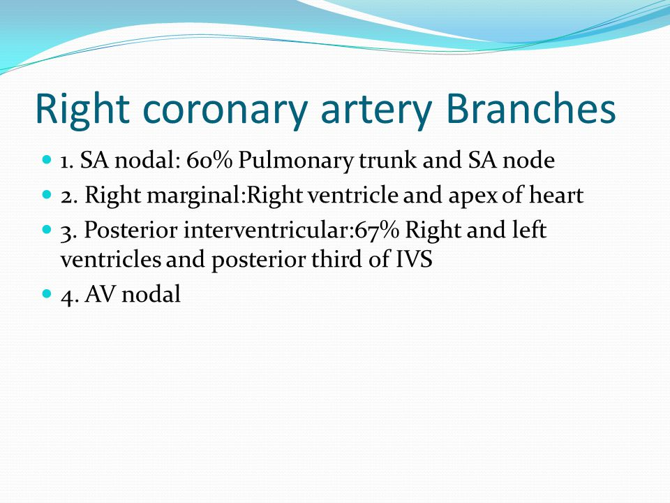 Right coronary artery Branches 1. SA nodal: 60% Pulmonary trunk and SA node 2. Right marginal:Right ventricle and apex of heart 3. Posterior intervent