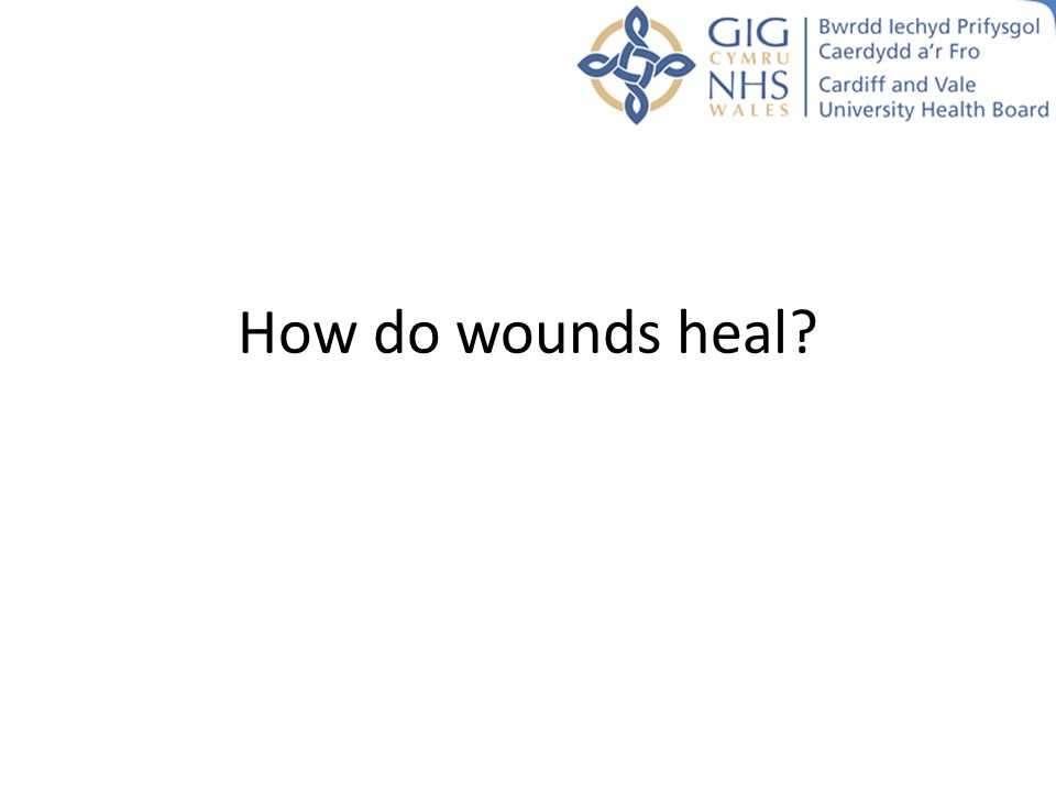 How do wounds heal?