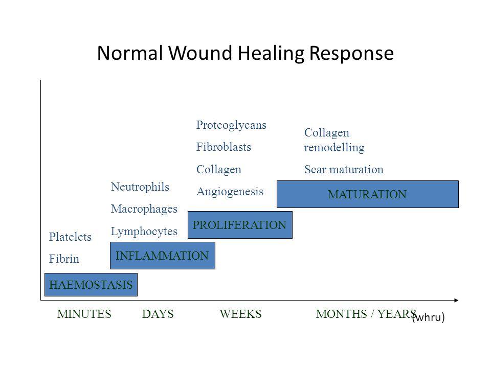 Normal Wound Healing Response HAEMOSTASIS INFLAMMATION PROLIFERATION MATURATION MINUTESDAYSWEEKSMONTHS / YEARS Platelets Fibrin Neutrophils Macrophage