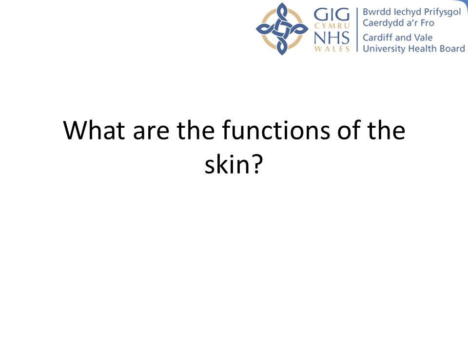 What are the functions of the skin?