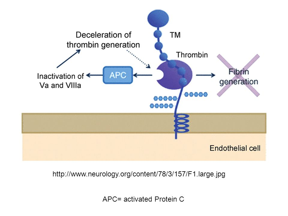 http://www.neurology.org/content/78/3/157/F1.large.jpg APC= activated Protein C