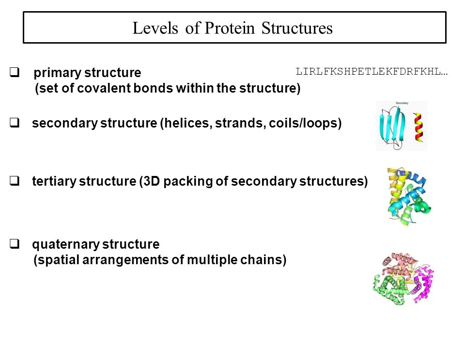 Tertiary structure = the 3D shape of a single protein chain, which is stabilized by a large number of noncovalent interactions.