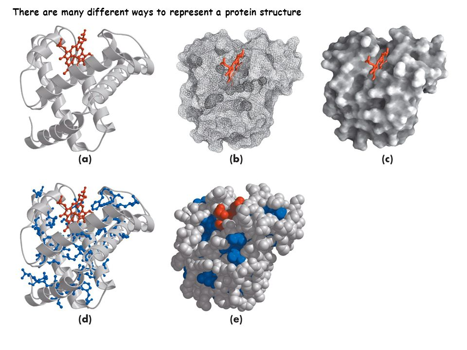 There are many different ways to represent a protein structure