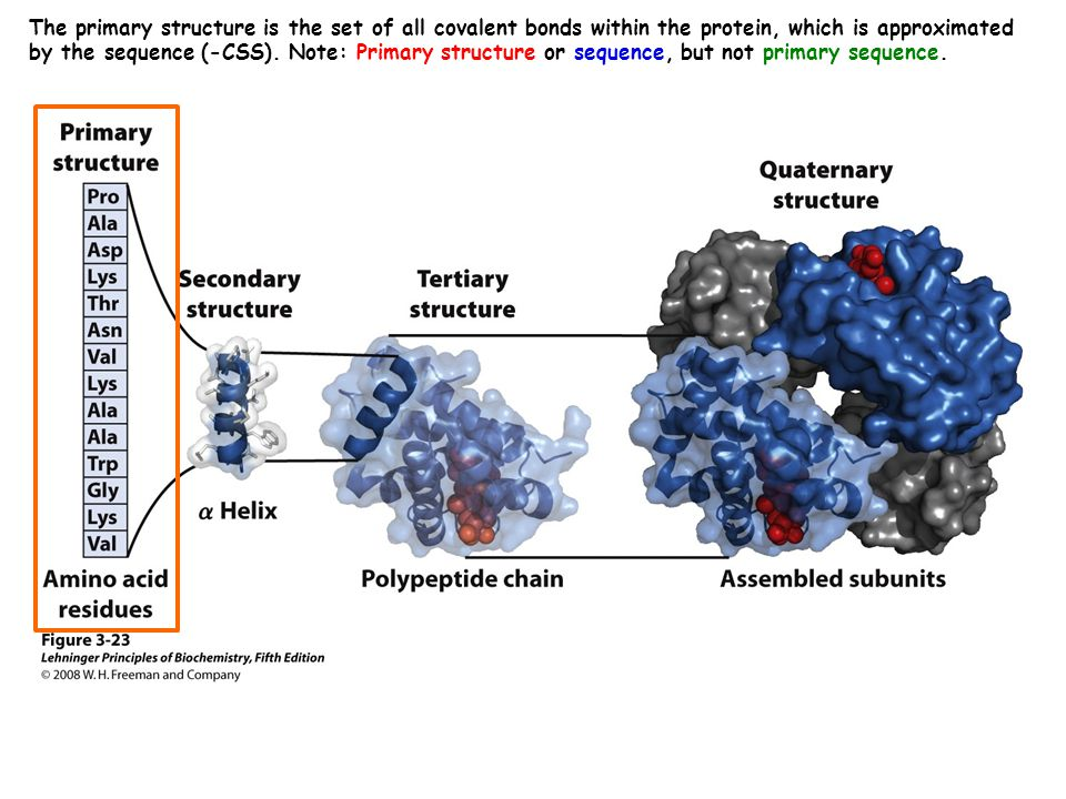 SCOP = structure classification of proteins