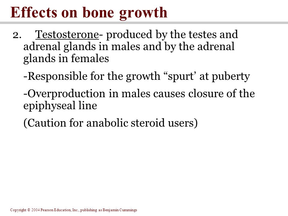 Copyright © 2004 Pearson Education, Inc., publishing as Benjamin Cummings Effects on bone growth 2.