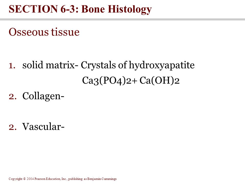 Copyright © 2004 Pearson Education, Inc., publishing as Benjamin Cummings Osseous tissue 1.solid matrix- Crystals of hydroxyapatite Ca3(PO4)2+ Ca(OH)2 2.Collagen- 2.Vascular- SECTION 6-3: Bone Histology