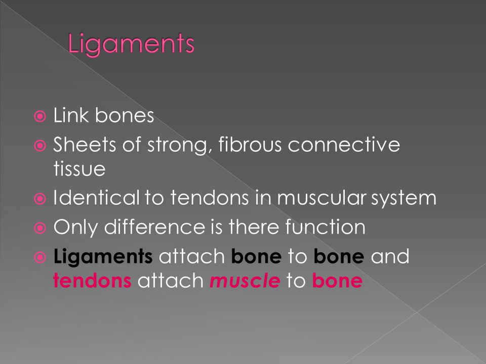  Link bones  Sheets of strong, fibrous connective tissue  Identical to tendons in muscular system  Only difference is there function  Ligaments attach bone to bone and tendons attach muscle to bone