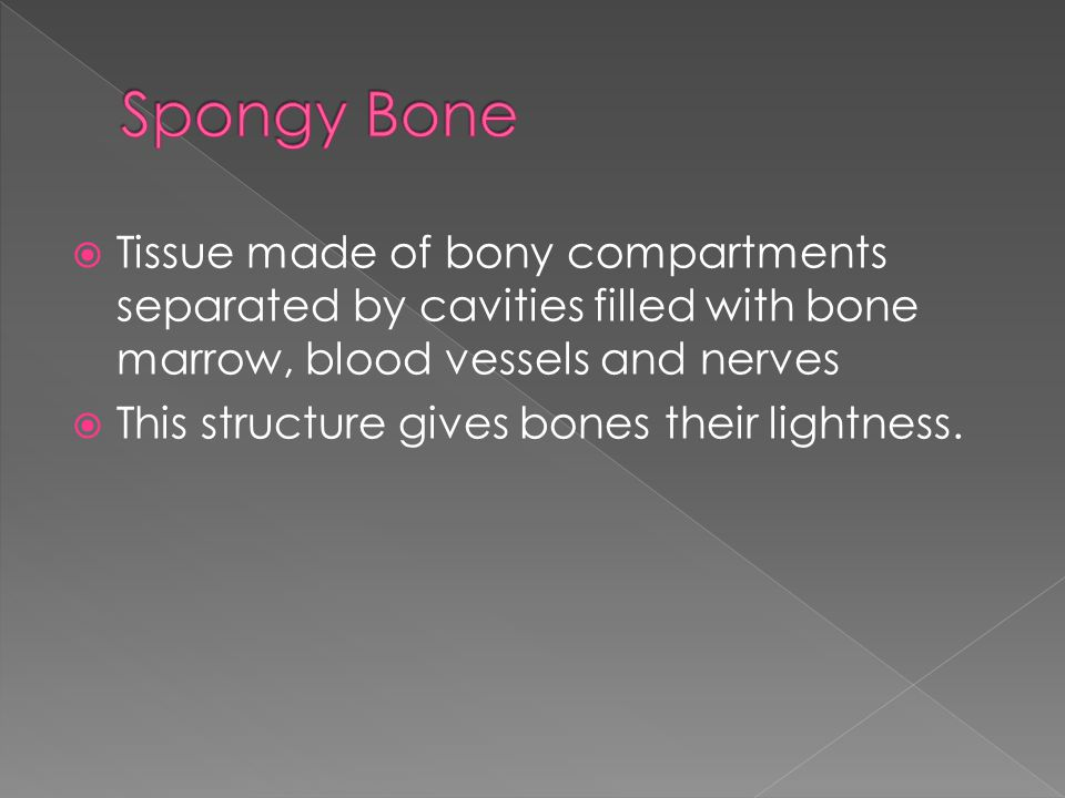  Tissue made of bony compartments separated by cavities filled with bone marrow, blood vessels and nerves  This structure gives bones their lightness.