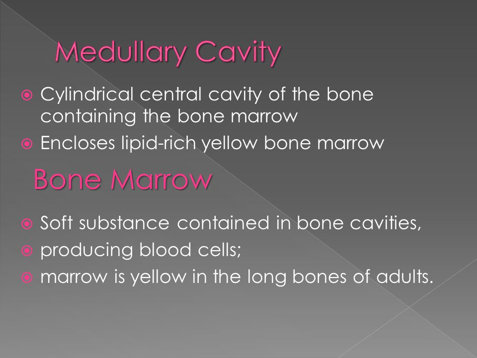  Transverse canals of the compact bone enclosing blood vessels and nerves;  Connect the Haversian canals with each other and with the medullary cavity and the periosteum Blood Vessel  Channel in the bone through which the blood circulates, carrying the nutrients and mineral salts the bone requires