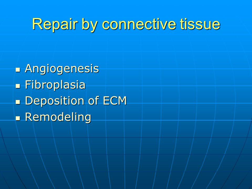 Repair by connective tissue Angiogenesis Angiogenesis Fibroplasia Fibroplasia Deposition of ECM Deposition of ECM Remodeling Remodeling