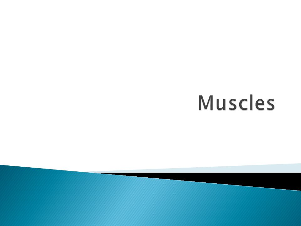  More than 600 muscles in our bodies (about 650)  Muscles make up approximately half of the human body's weight  The human heart will beat about 40 million times a year, and a person s heart will beat approximately 2.5 billion times by the time of their 70th birthday.