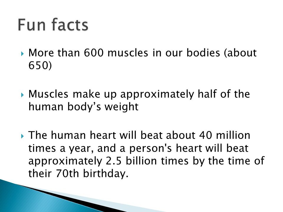  More than 600 muscles in our bodies (about 650)  Muscles make up approximately half of the human body's weight  The human heart will beat about 40 million times a year, and a person s heart will beat approximately 2.5 billion times by the time of their 70th birthday.