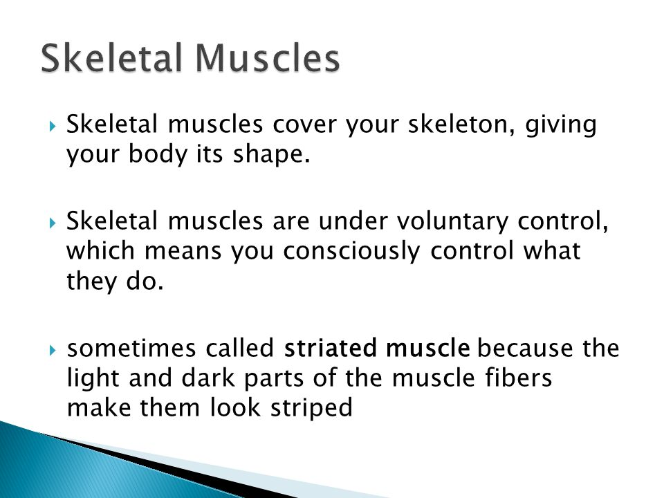  Skeletal muscles cover your skeleton, giving your body its shape.