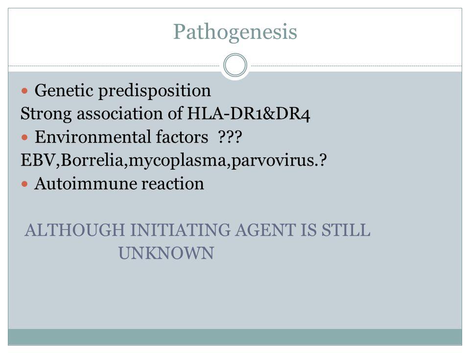 Pathogenesis Genetic predisposition Strong association of HLA-DR1&DR4 Environmental factors ??? EBV,Borrelia,mycoplasma,parvovirus.? Autoimmune reacti