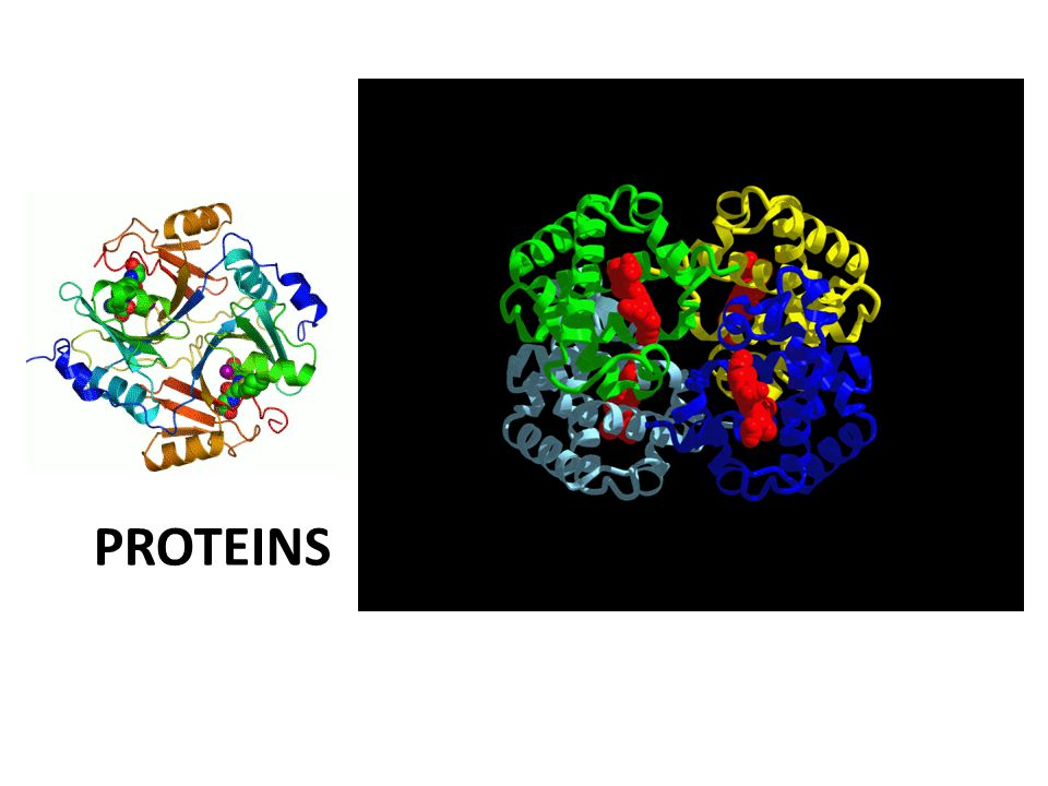 Structure and Function 3d shape of the protein is incredibly important!!.