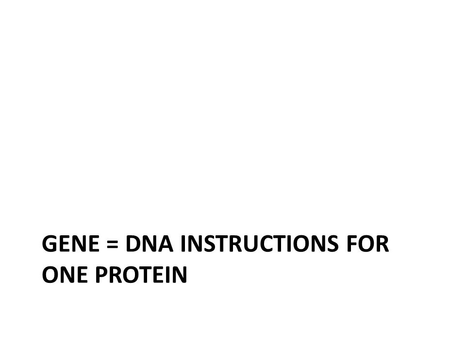 GENE = DNA INSTRUCTIONS FOR ONE PROTEIN