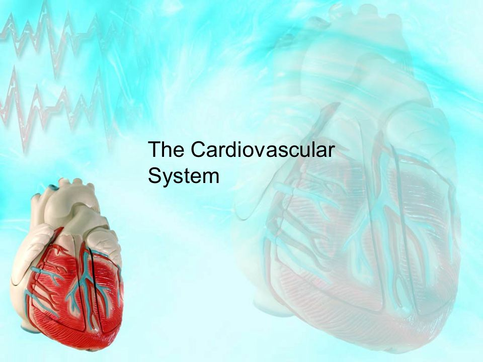 Assessment Criteria P5 – Describe the structure and function of the cardiovascular system M2 – Explain the function of the cardiovascular system Structure of the cardiovascular system: heart (atria, ventricles, bicuspid valve, tricuspid valve, aortic valve, pulmonary valve, aorta, vena cava – superior and inferior, pulmonary vein, pulmonary artery); blood vessels (arteries, arterioles, capillaries, veins, venuoles) Function of the cardiovascular system: delivery of oxygen and nutrients; removal of waste products; thermoregulation (vasodilation and vasoconstriction of vessels); function of blood (oxygen transport, clotting, fighting infection)