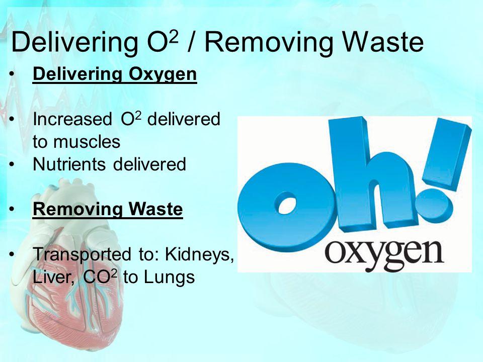 Delivering O 2 / Removing Waste Delivering Oxygen Increased O 2 delivered to muscles Nutrients delivered Removing Waste Transported to: Kidneys, Liver