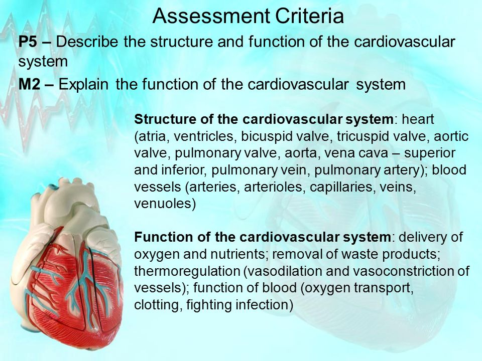 Assessment Criteria P5 – Describe the structure and function of the cardiovascular system M2 – Explain the function of the cardiovascular system Struc