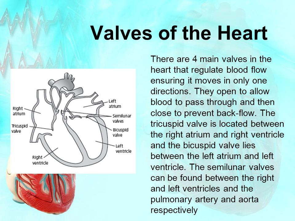 Valves of the Heart There are 4 main valves in the heart that regulate blood flow ensuring it moves in only one directions. They open to allow blood t