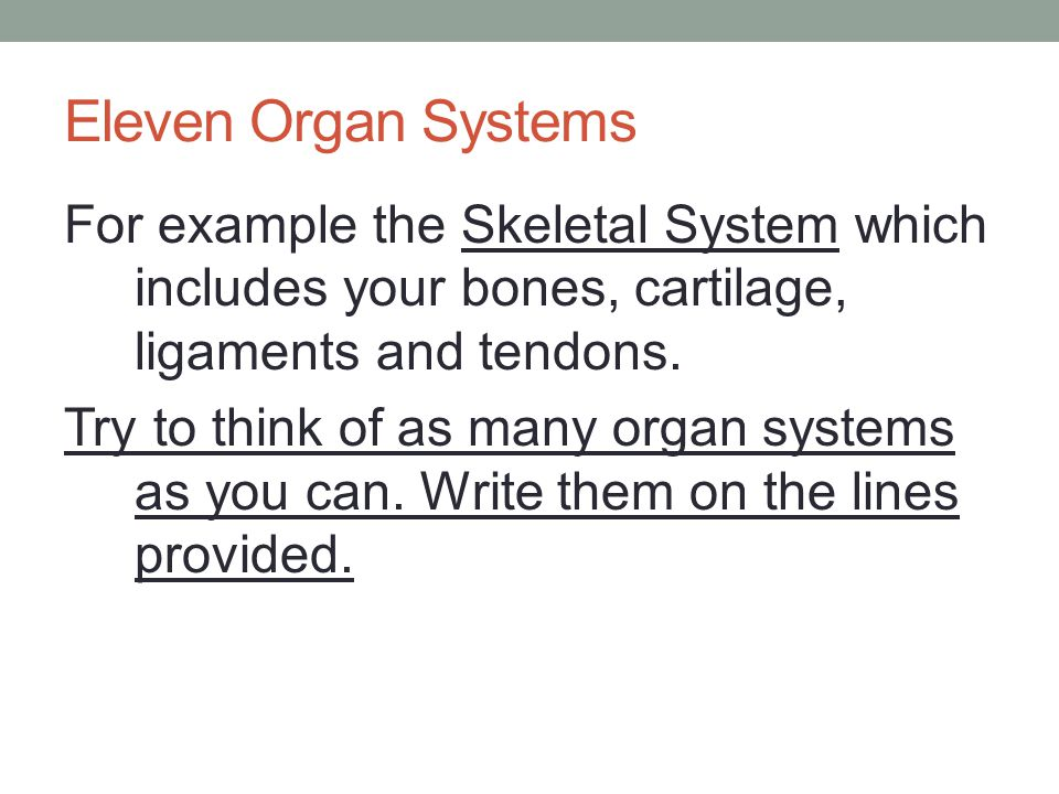 The Eleven Organ Systems Skeletal Muscular Circulatory Respiratory Digestive Nervous Reproductive Excretory Lymphatic/Immune Endocrine Integumentary