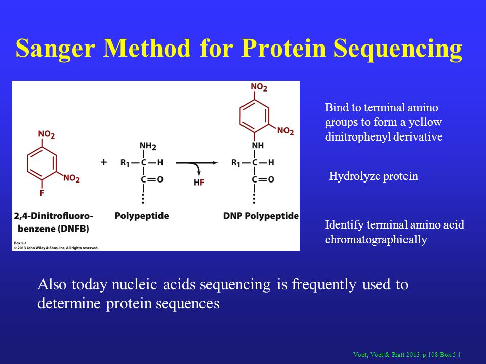 Sanger Method for Protein Sequencing Voet, Voet & Pratt 2013 p.108 Box 5.1 Bind to terminal amino groups to form a yellow dinitrophenyl derivative Hyd