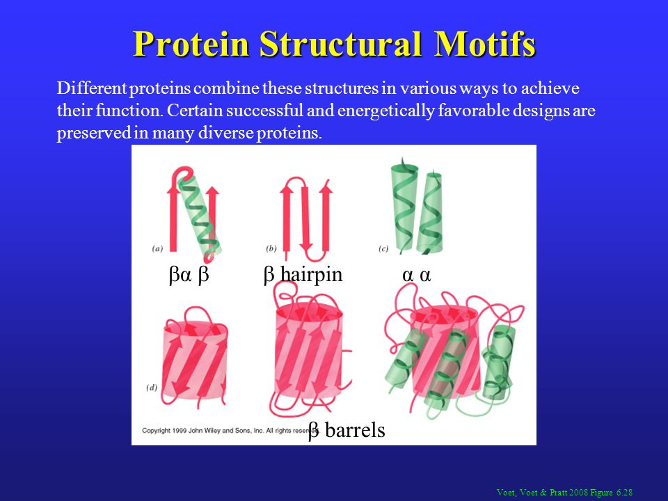 Protein Structural Motifs  α  hairpin α  barrels Voet, Voet & Pratt 2008 Figure 6.28 Different proteins combine these structures in various ways t