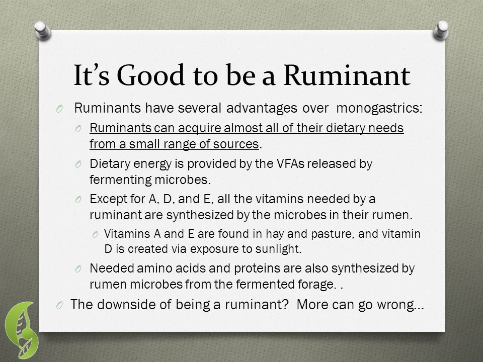 It's Good to be a Ruminant O Ruminants have several advantages over monogastrics: O Ruminants can acquire almost all of their dietary needs from a sma