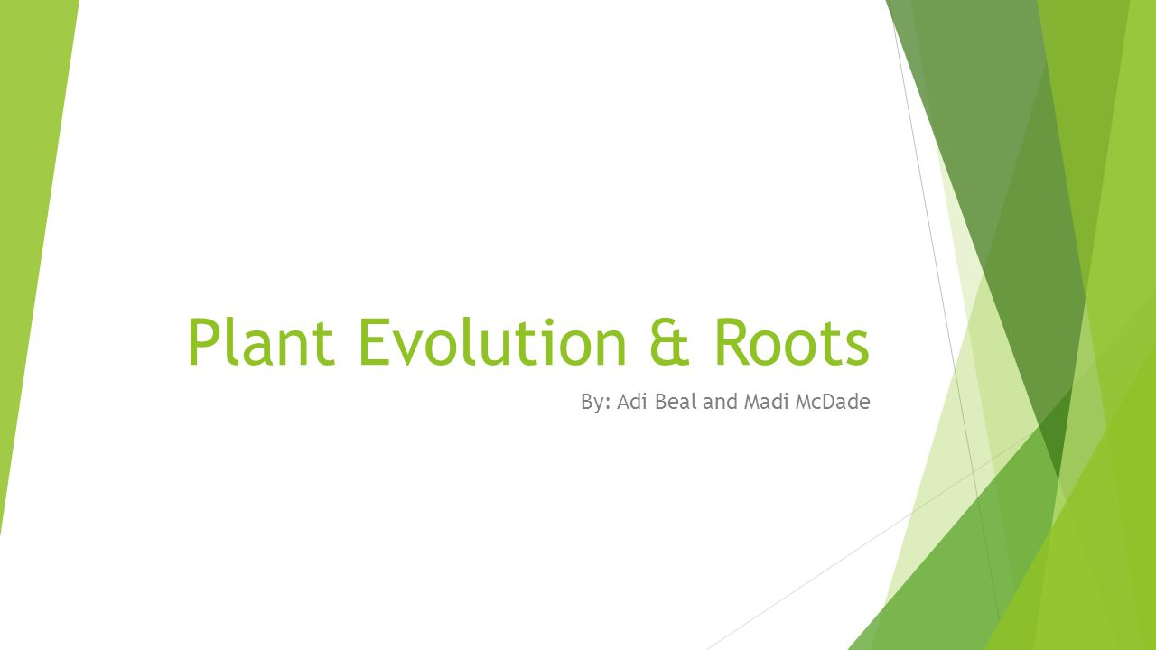 Plant Evolution & Roots By: Adi Beal and Madi McDade