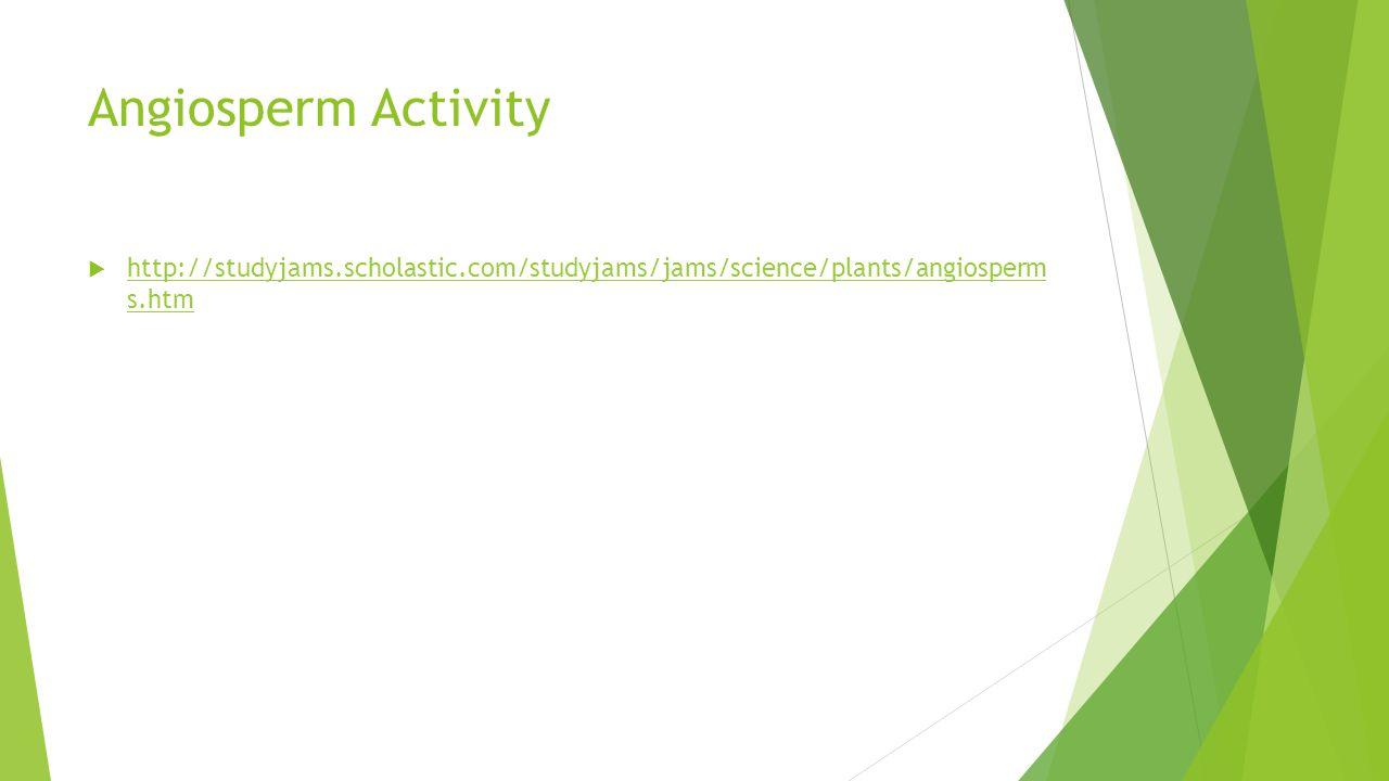 Angiosperm Activity  http://studyjams.scholastic.com/studyjams/jams/science/plants/angiosperm s.htm http://studyjams.scholastic.com/studyjams/jams/sc