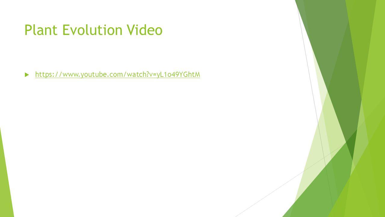 Plant Evolution Video  https://www.youtube.com/watch?v=yL1o49YGhtM https://www.youtube.com/watch?v=yL1o49YGhtM