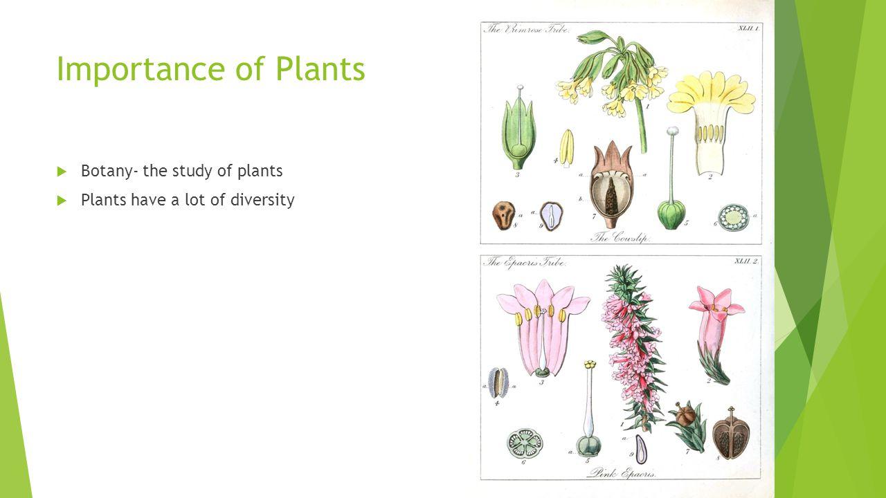 Importance of Plants  Botany- the study of plants  Plants have a lot of diversity