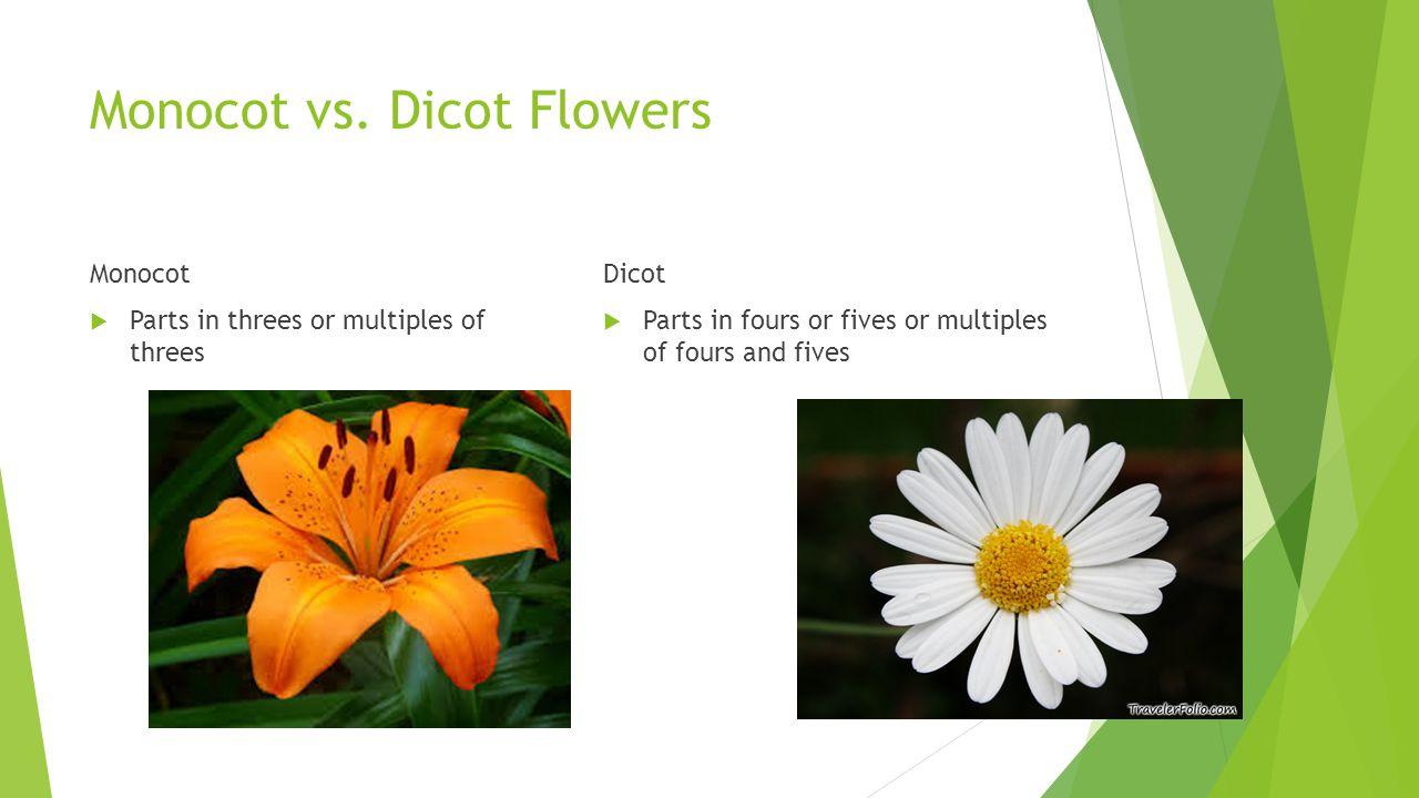 Monocot vs. Dicot Flowers Monocot  Parts in threes or multiples of threes Dicot  Parts in fours or fives or multiples of fours and fives