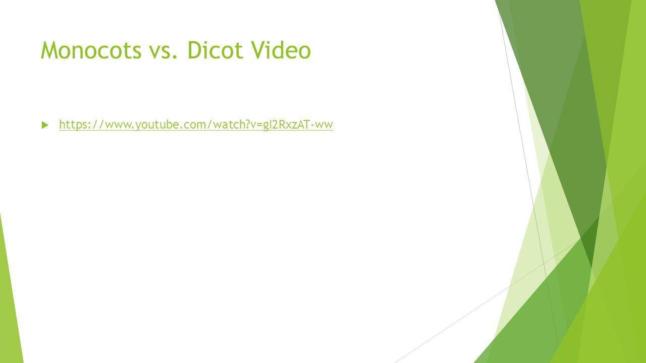 Monocots vs. Dicot Video  https://www.youtube.com/watch?v=gI2RxzAT-ww https://www.youtube.com/watch?v=gI2RxzAT-ww