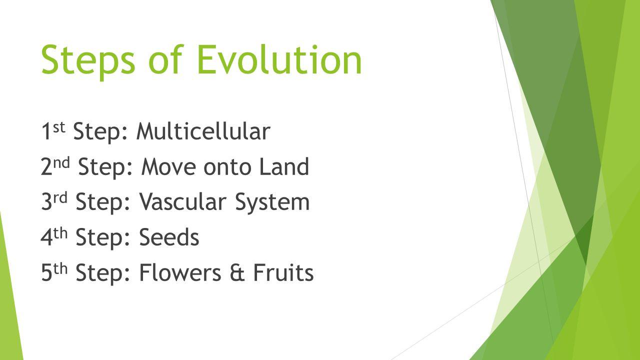 Steps of Evolution 1 st Step: Multicellular 2 nd Step: Move onto Land 3 rd Step: Vascular System 4 th Step: Seeds 5 th Step: Flowers & Fruits
