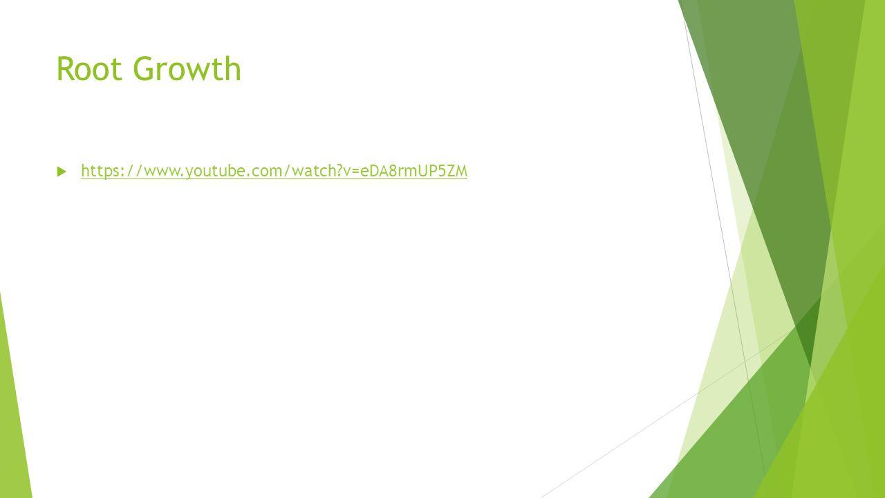 Root Growth  https://www.youtube.com/watch?v=eDA8rmUP5ZM https://www.youtube.com/watch?v=eDA8rmUP5ZM