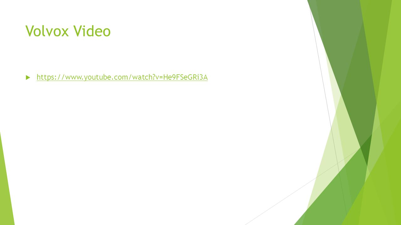 Volvox Video  https://www.youtube.com/watch?v=He9FSeGRi3A https://www.youtube.com/watch?v=He9FSeGRi3A