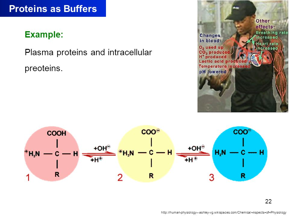 Kulsoom Proteins as Buffers Example: Plasma proteins and intracellular preoteins.