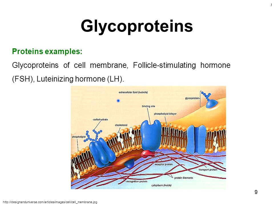Kulsoom Glycoproteins 9 Proteins examples: Glycoproteins of cell membrane, Follicle-stimulating hormone (FSH), Luteinizing hormone (LH). http://design
