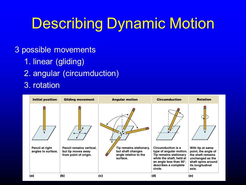 Describing Dynamic Motion 3 possible movements 1. linear (gliding) 2. angular (circumduction) 3. rotation
