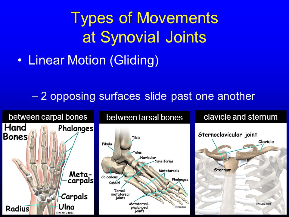 Linear Motion (Gliding) –2 opposing surfaces slide past one another between tarsal bones between carpal bonesclavicle and sternum