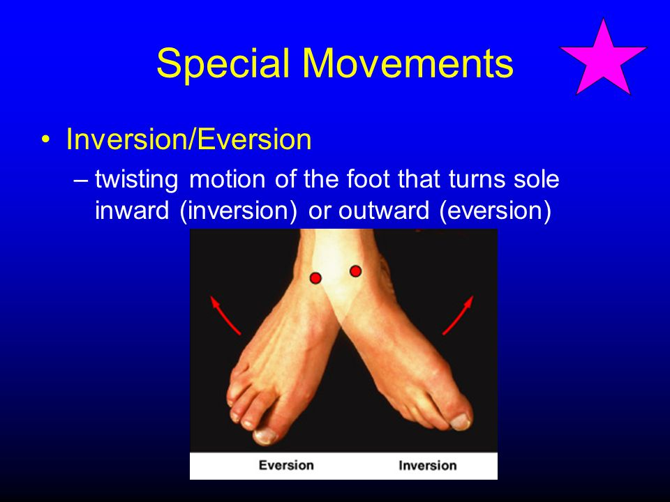 Special Movements Inversion/Eversion –twisting motion of the foot that turns sole inward (inversion) or outward (eversion)