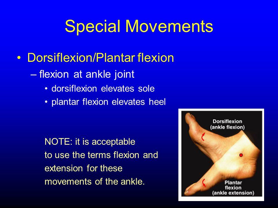 Special Movements Dorsiflexion/Plantar flexion –flexion at ankle joint dorsiflexion elevates sole plantar flexion elevates heel NOTE: it is acceptable