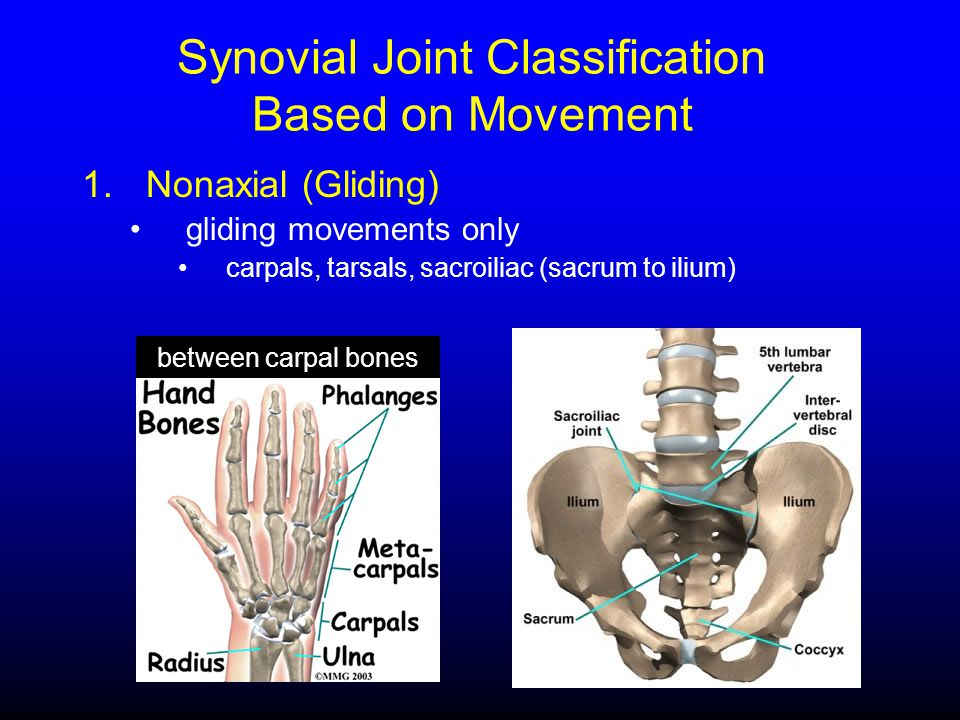 1.Nonaxial (Gliding) gliding movements only carpals, tarsals, sacroiliac (sacrum to ilium) between carpal bones