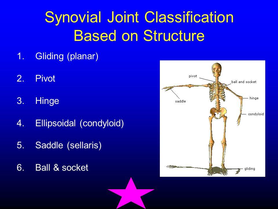 1.Gliding (planar) 2.Pivot 3.Hinge 4.Ellipsoidal (condyloid) 5.Saddle (sellaris) 6.Ball & socket