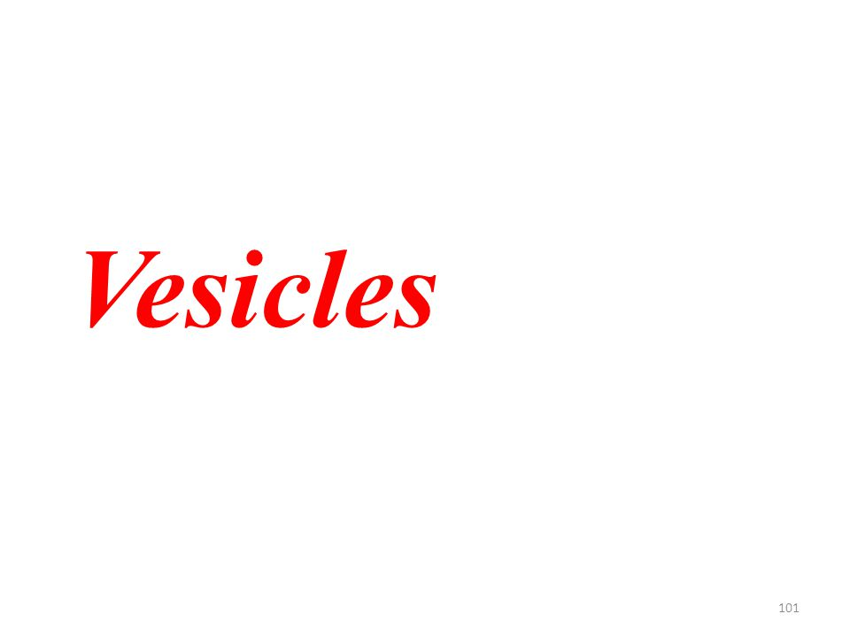101 Vesicles