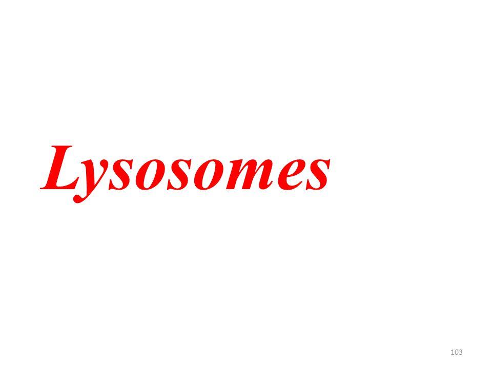 103 Lysosomes